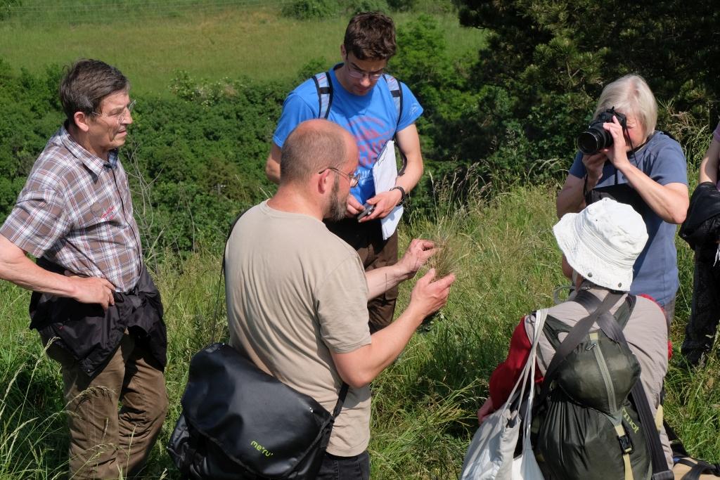 Exkursion Botanischer Verein bei Wettin, Foto: Katrin Schneider