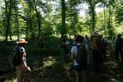 4_Wald_im_Umfeld_Schlesenkriche_Vereinsexkursion_27.05.2017