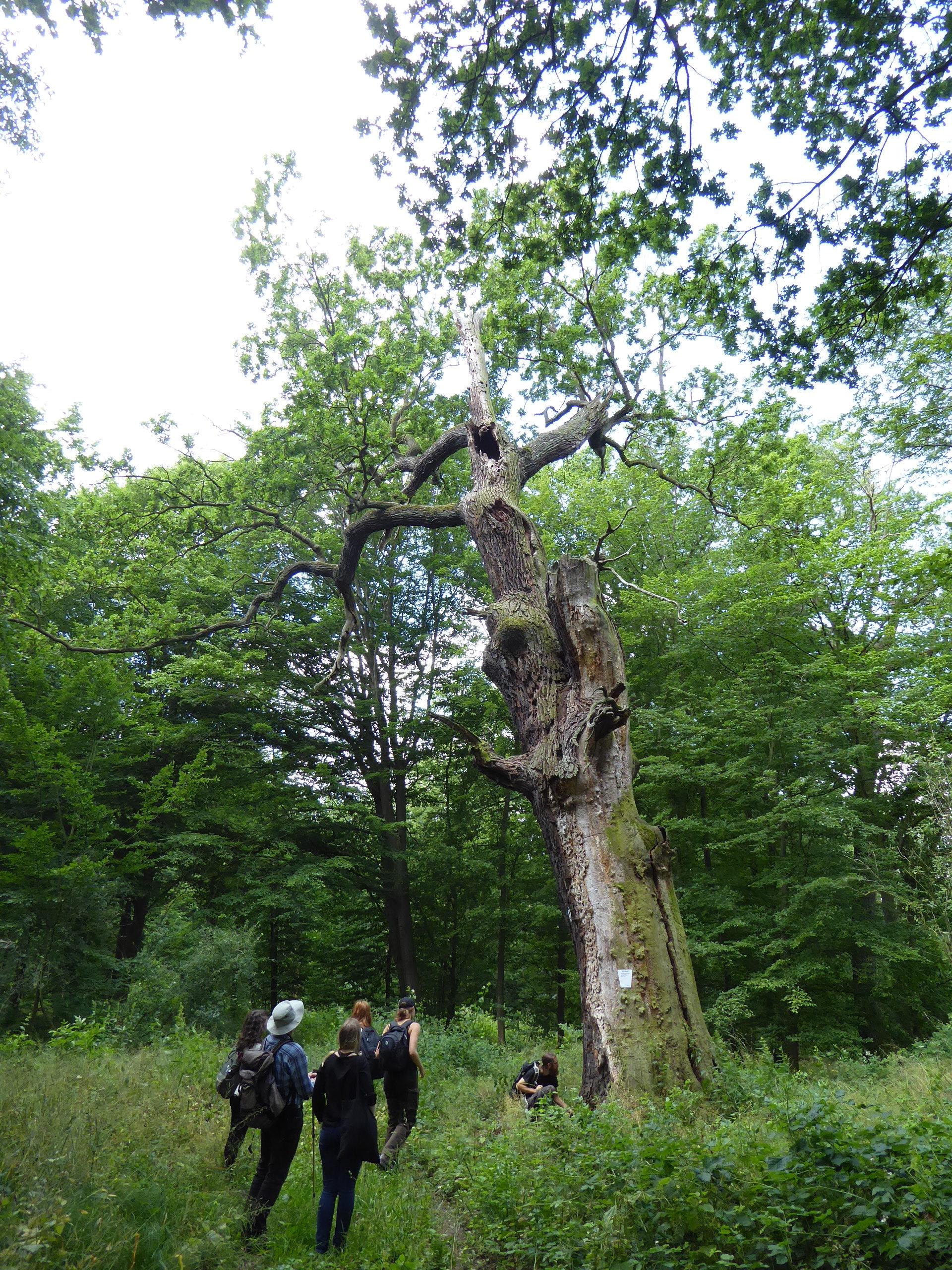 Exkursion-Tiergarten-2020-Guido-Warthemann-P1020743-rotated