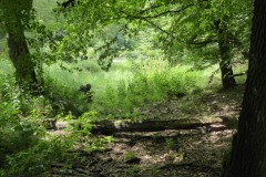 Exkursion-Tiergarten-2020-Guido-Warthemann-P1020760