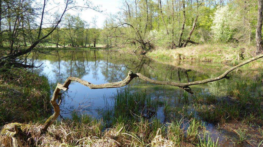 Wasser-gibts-auch-noch-Retzau-alte-Muldeflutrinne-P1000455x